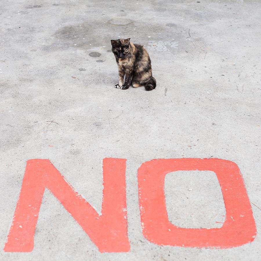 Calico cat says no.