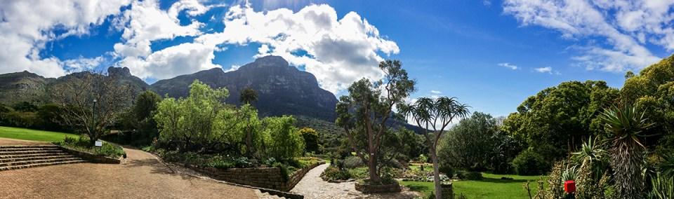 Landscape at Kirstenbosch, South Africa.