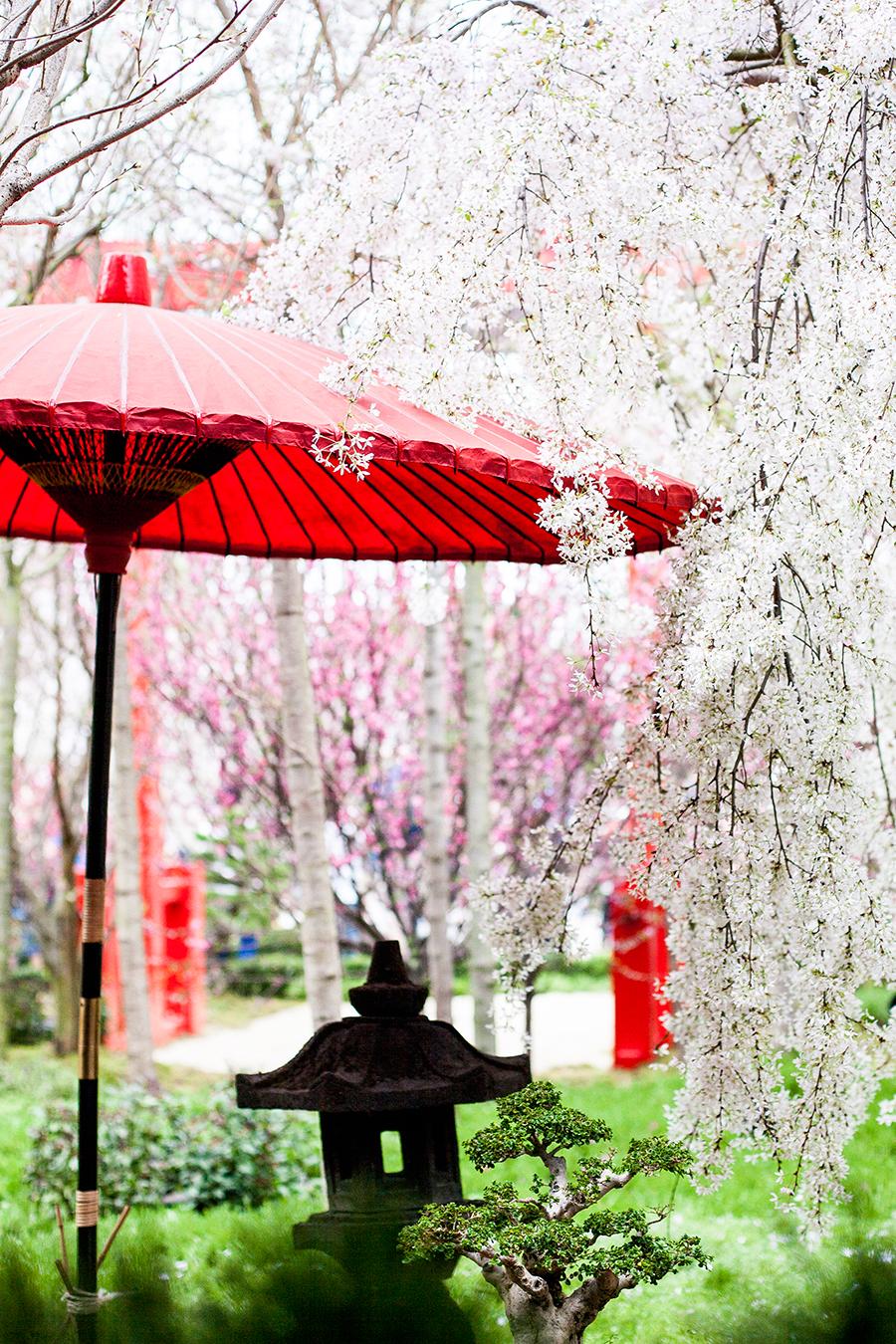 Japanese garden umbrella among Sakura at the Flower Dome at Gardens by the Bay, Singapore.