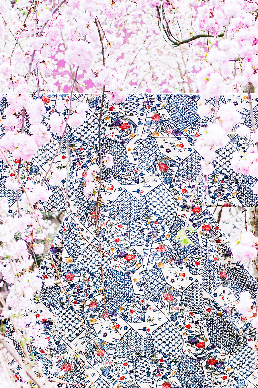 Kimono among Sakura at the Flower Dome at Gardens by the Bay, Singapore.