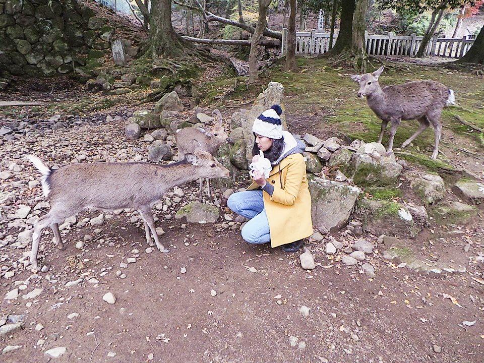 Shasha feeding senbei to the deer in Nara Park, Japan. Photo by Shasha.