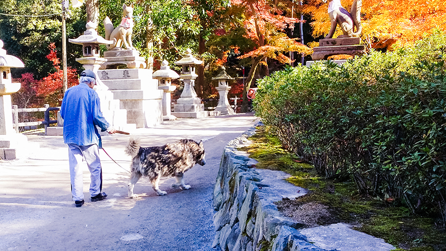 Man walking large dog at Fushimi Inari, Kyoto Japan.