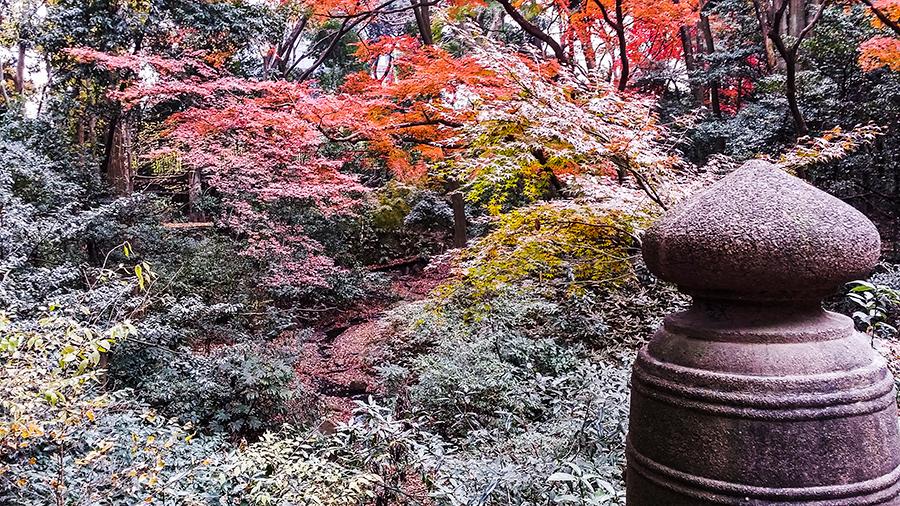 Autumn leaves at Meiji Shrine at Harajuku, Tokyo Japan.