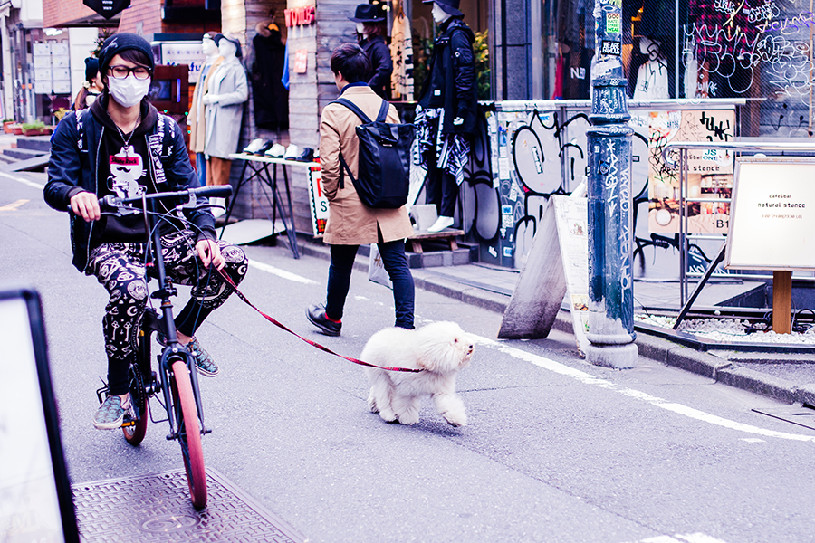 Japanese male riding a bicycle and walking his dog in Harajuku, Tokyo Japan.