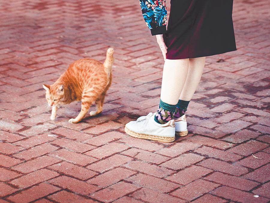 Three-legged cat.