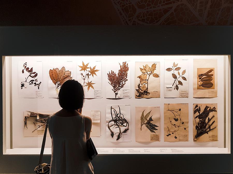 Herbarium sheets at Lee Kong Chian Natural History Museum.