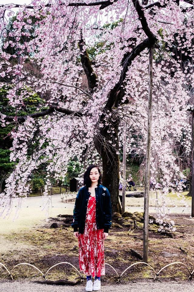 Portrait with pink cherry blossoms at Koishikawa Korakuen, Tokyo Japan.