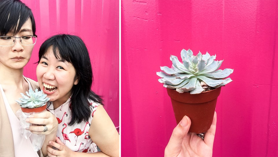 Succulent from Rabbit Island at Artbox Singapore 2018.