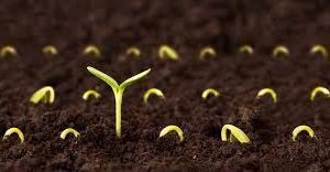 Pupu's Seeds