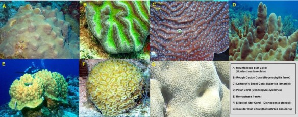 7 corals from FL suggested for Endangered Species Act