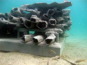 Blue Heron Bridge Reef Cell
