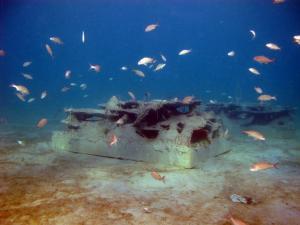 Blue Heron Bridge Reef Cell with Bait Fish
