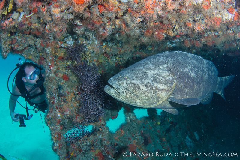Goliath Grouper Survey