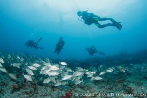 Palm Beach Drift Diving