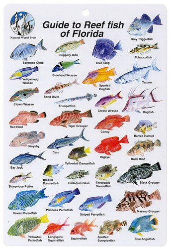 Florida Reef Fish ID Card