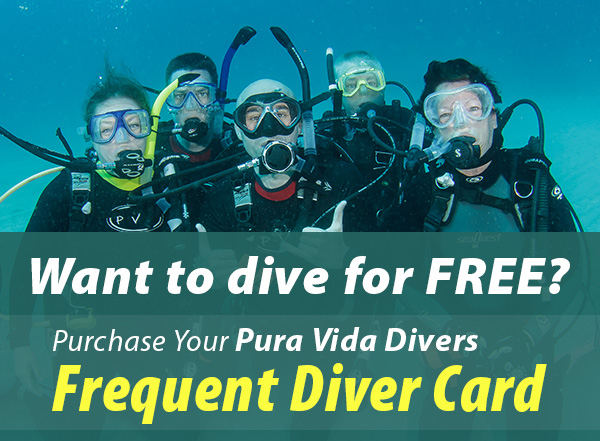 Frequent Diver Card image