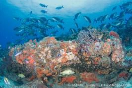 South Florida Reef Dive