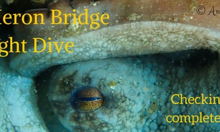Blue Heron Bridge Night Dive: November 26th