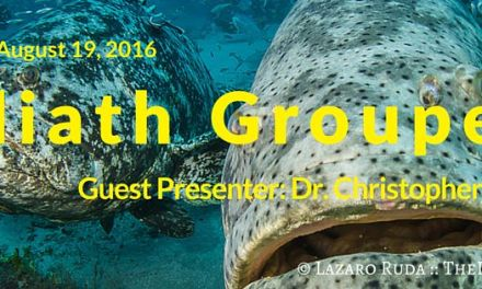 2016 August Social Night: Goliath Groupers with Dr. Christopher Koenig