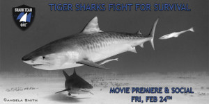 Shark Team One - Page Banner