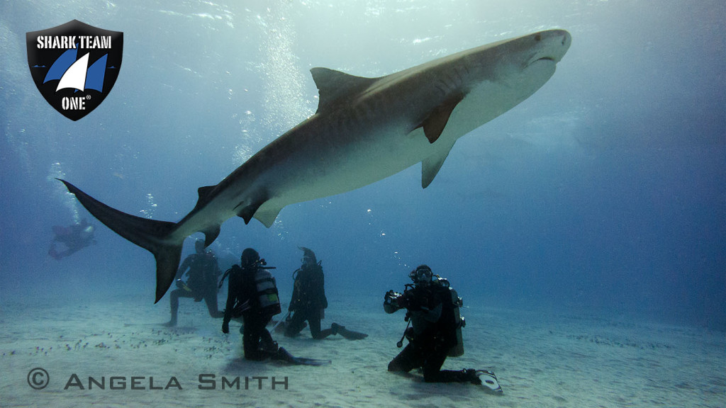 TIGER SHARKS FIGHT FOR SURVIVAL