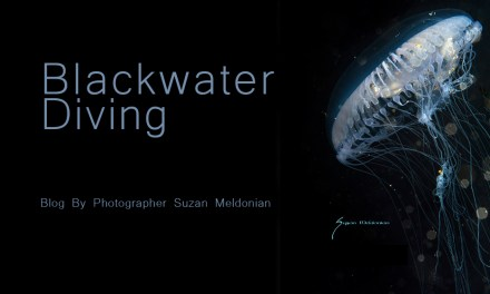BLACKWATER DIVING BY SUZAN MELDONIAN
