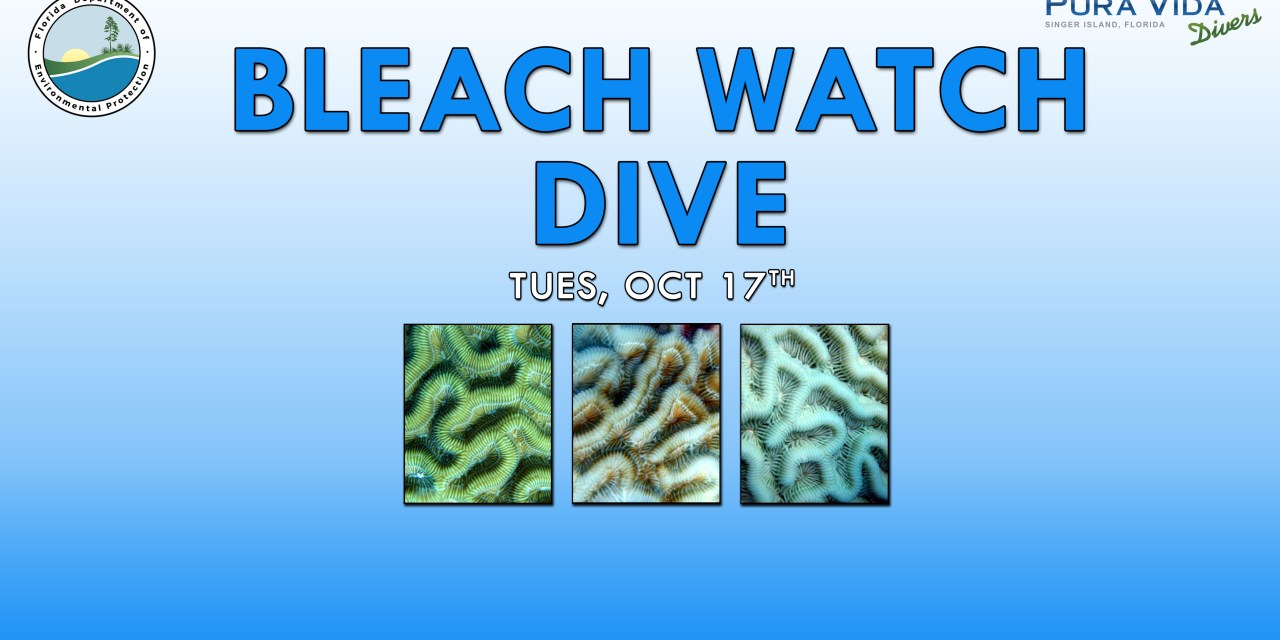 OCT 17: BLEACH WATCH DIVE