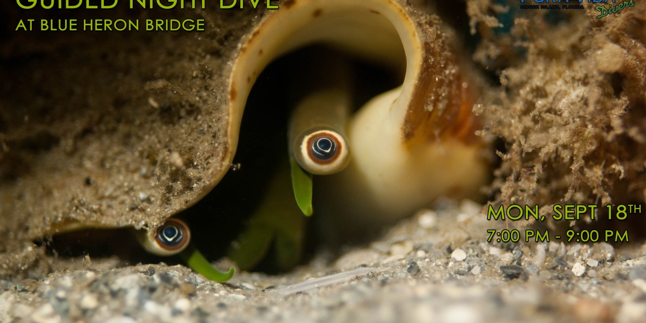 CANCELED – SEPT 18: GUIDED NIGHT DIVE AT BLUE HERON BRIDGE