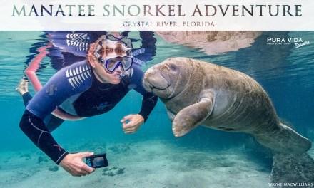 2018 Manatee Snorkel Adventure