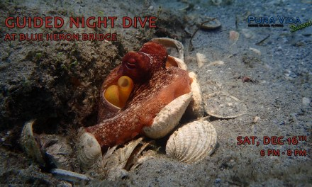 DEC 16: GUIDED NIGHT DIVE AT BLUE HERON BRIDGE