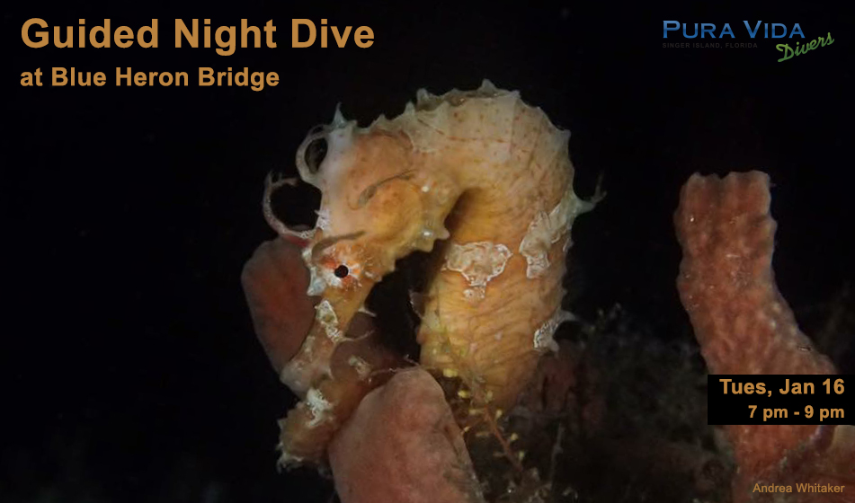JAN 16: GUIDED NIGHT DIVE AT BLUE HERON BRIDGE