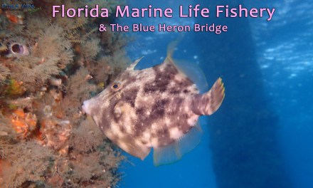 SOCIAL NIGHT: FLORIDA'S MARINE LIFE FISHERY