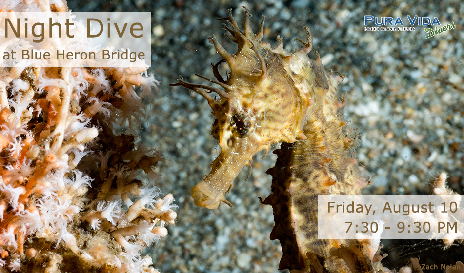 AUGUST 10: GUIDED NIGHT DIVE AT BLUE HERON BRIDGE
