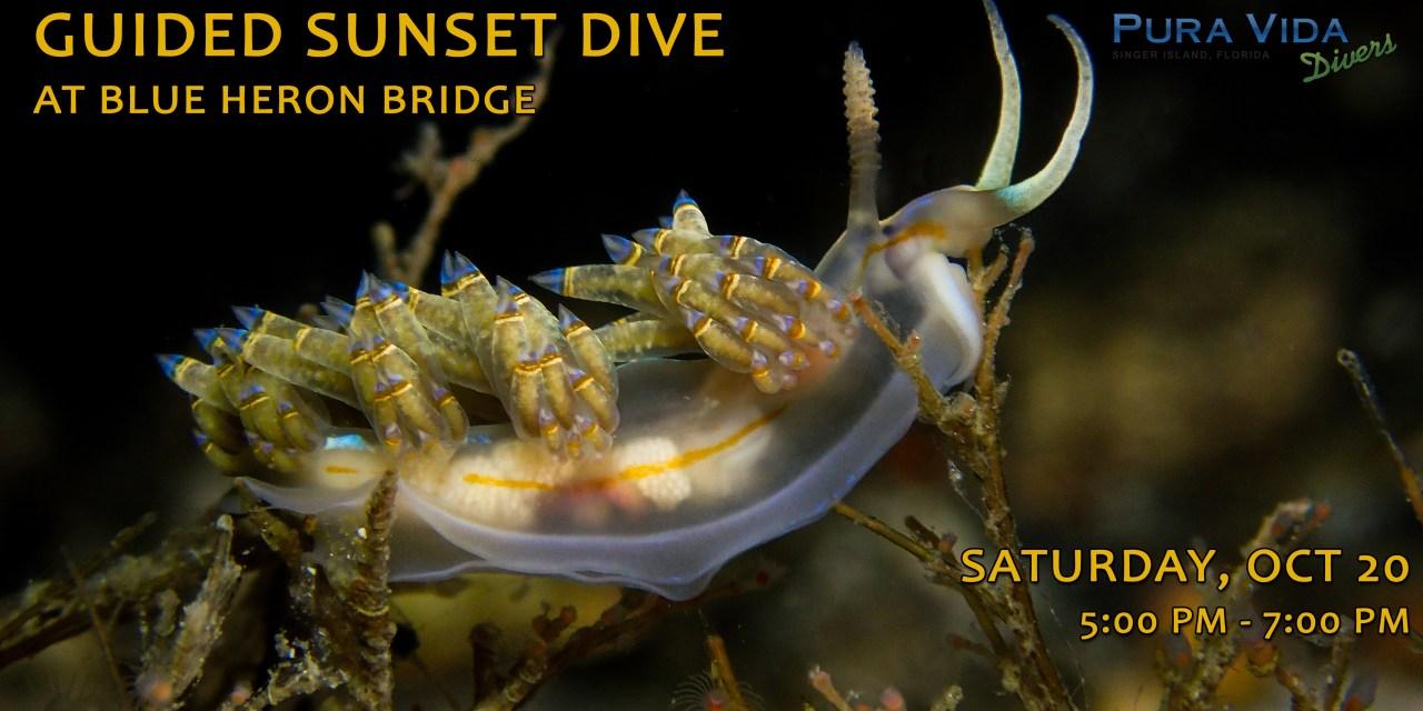 OCT 20: GUIDED SUNSET DIVE AT BLUE HERON BRIDGE