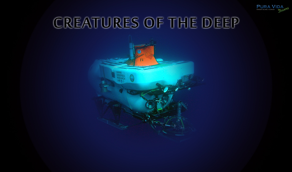 SOCIAL NIGHT: CREATURES OF THE DEEP