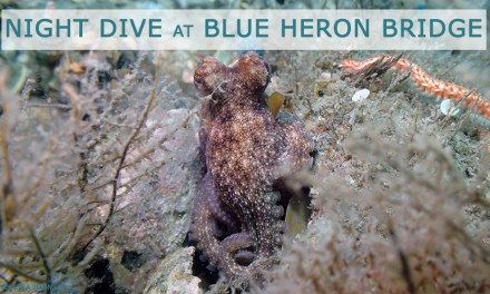 JAN 19: GUIDED NIGHT DIVE AT BLUE HERON BRIDGE