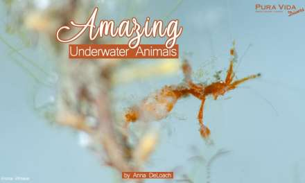 JULY SOCIAL NIGHT: AMAZING UNDERWATER ANIMALS