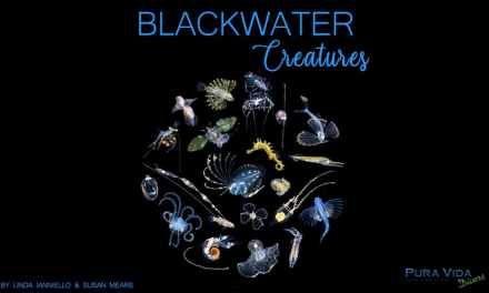 AUGUST SOCIAL NIGHT: BLACKWATER CREATURES