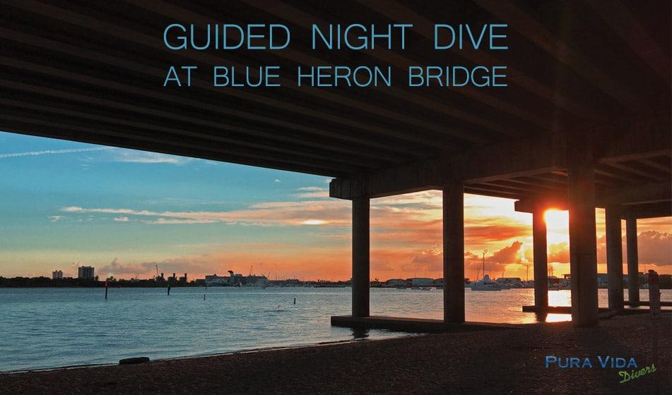 SEPTEMBER GUIDED NIGHT DIVES AT BLUE HERON BRIDGE