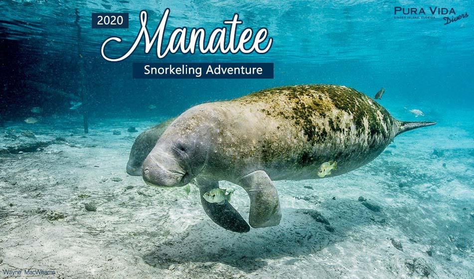 2020 MANATEE SNORKELING TRIP
