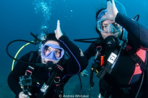 Palm Beach Shark Conservation Divers