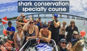 Shark Conservation Specialty Course