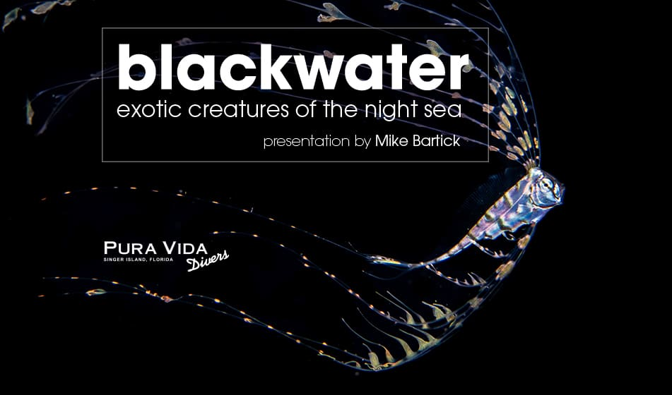BLACKWATER DIVING: EXOTIC CREATURES OF THE NIGHT SEA