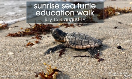 SUNRISE SEA TURTLE WALK