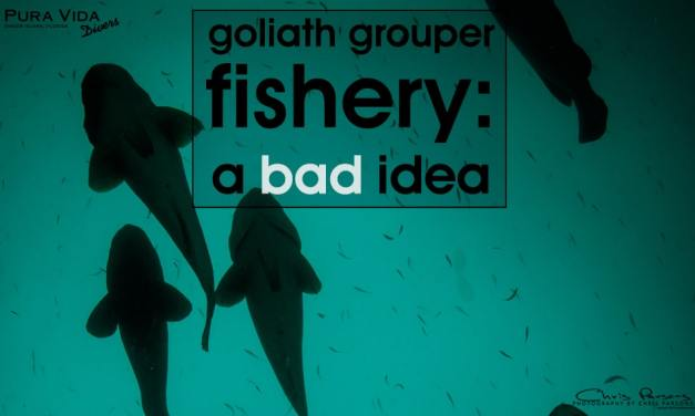 ATLANTIC GOLIATH GROUPER FISHERY: A BAD IDEA