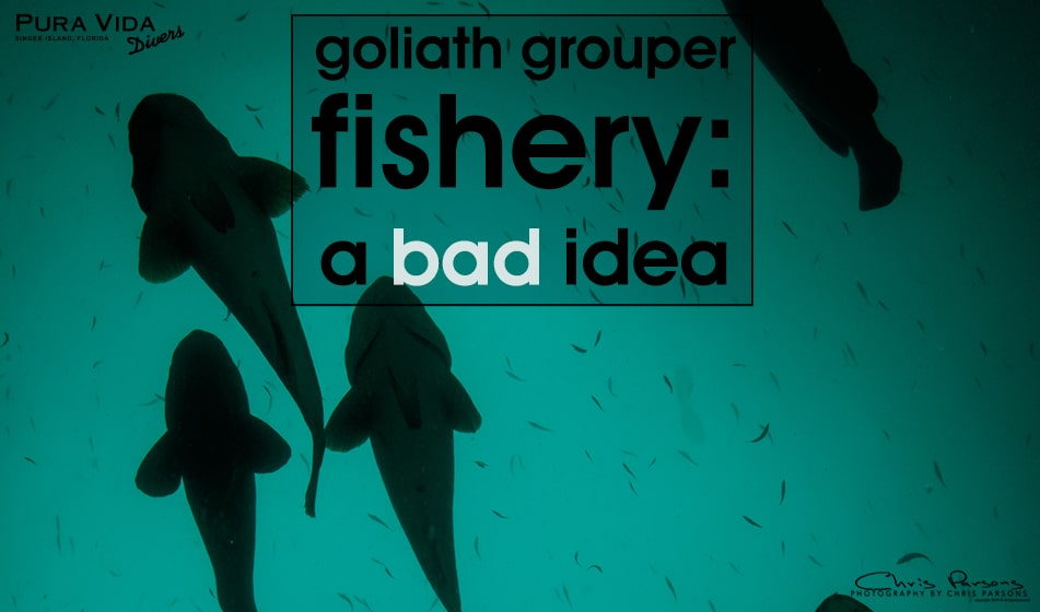 ATLANTIC GOLIATH GROUPER FISHERY: A BAD IDEA