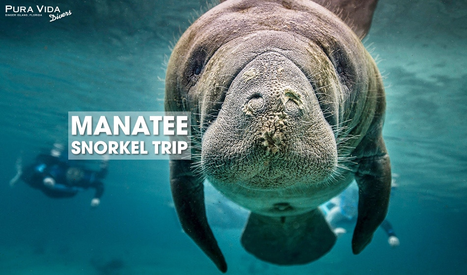 2021 Manatee Snorkel Trip