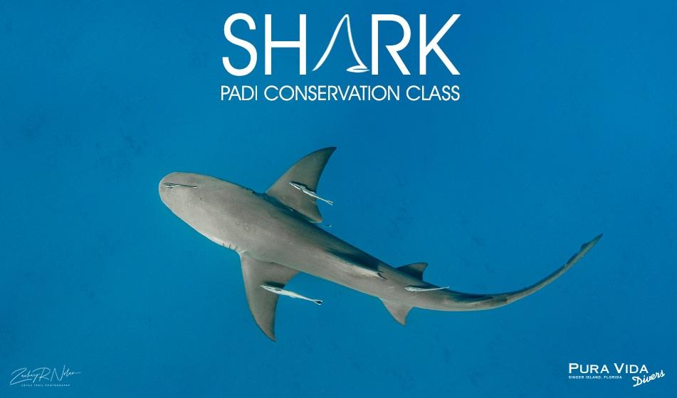 PADI SHARK CONSERVATION CLASS