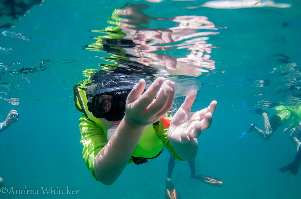 Eco Snorkel Camp - Jellyfish
