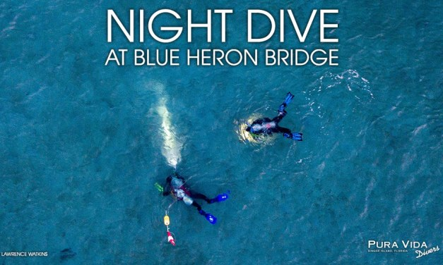 APRIL NIGHT DIVES
